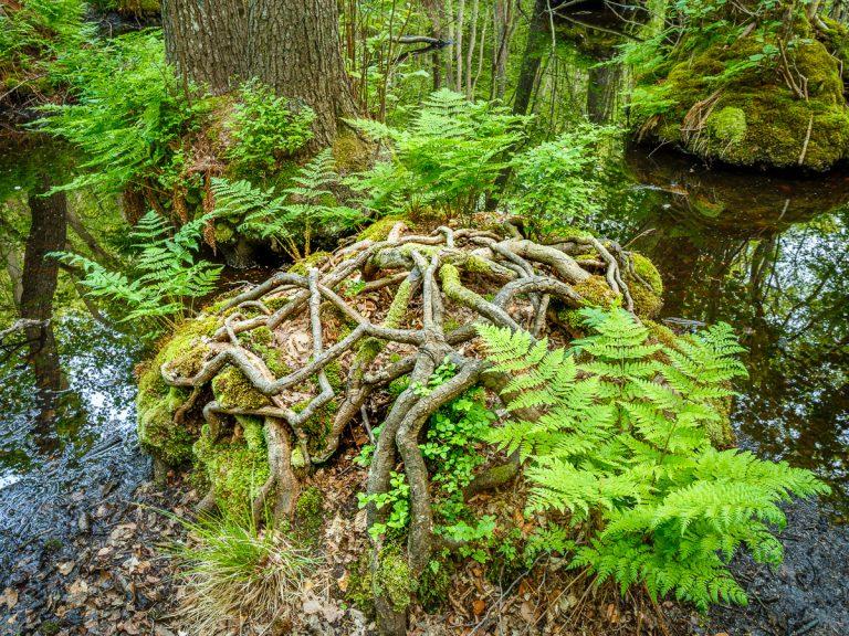 Österlen 2016 - Allkärr i Stenshuvud Nationalpark