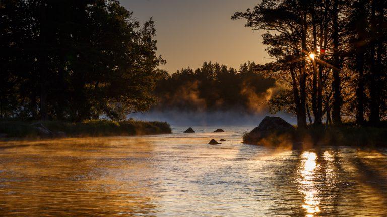 Gysinge 2017 - Gyllene morgon