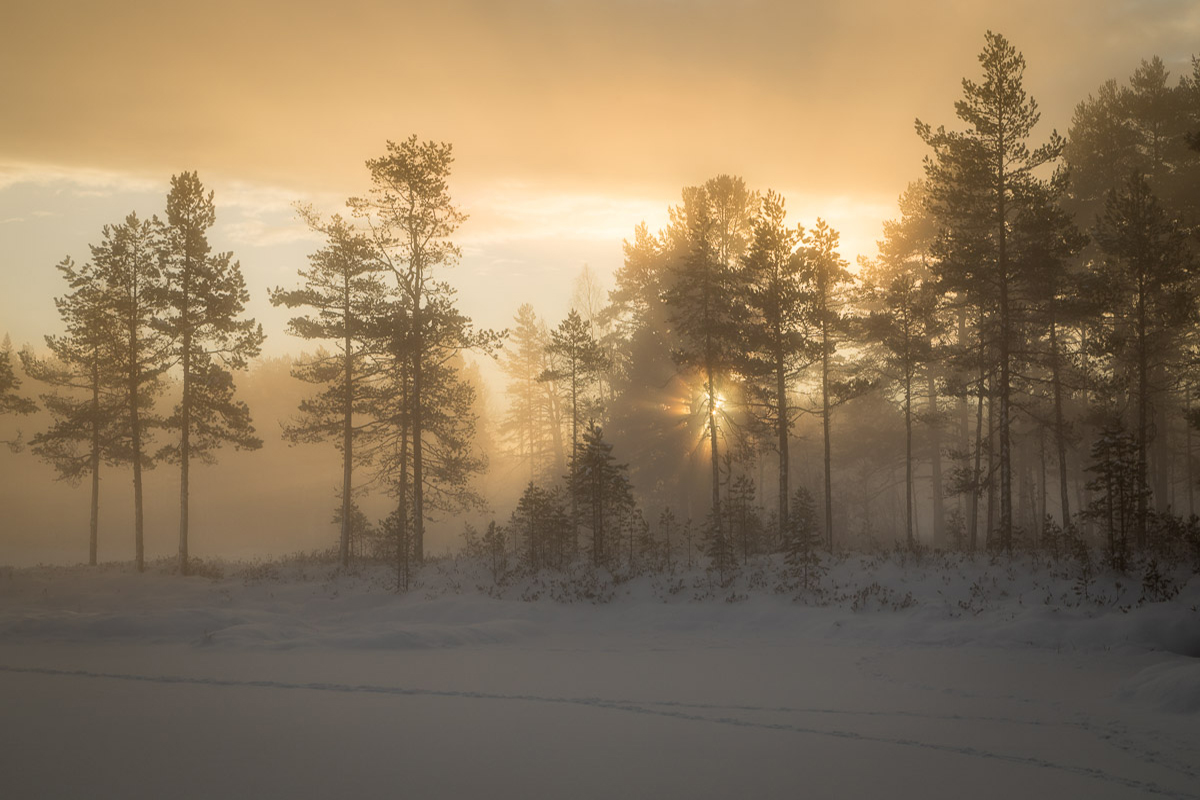 Gyllene timmen med morgondimma och soluppång vid Tillhedstjärn i Furudal