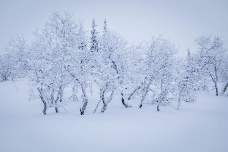 Vinter på fjället