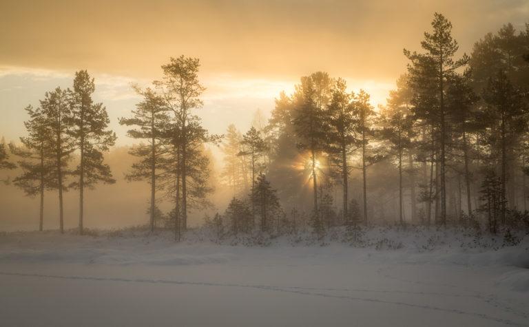 En till bild från gyllene timmen med morgondimma och soluppång vid Tillhedstjärn i Furuda