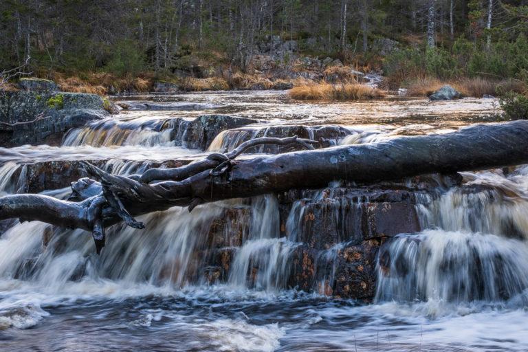 Tjåberget naturreservat i Dalarna